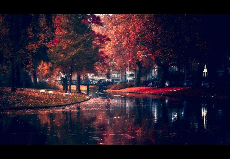 Осень в Роттердамеphoto preview