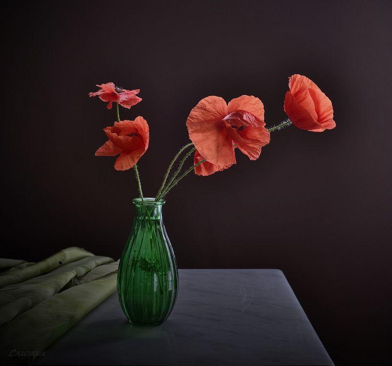 композиция,лето,ваза,маки,свет С макамиphoto preview