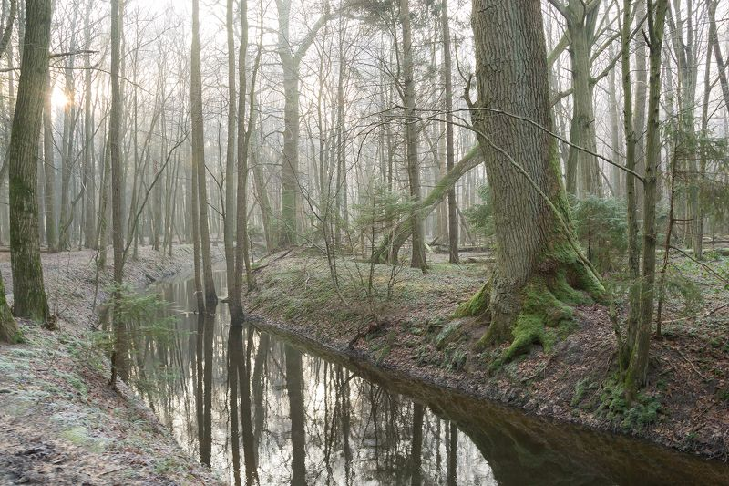 природа, лес, зима, пейзаж Старый дремучий лесphoto preview