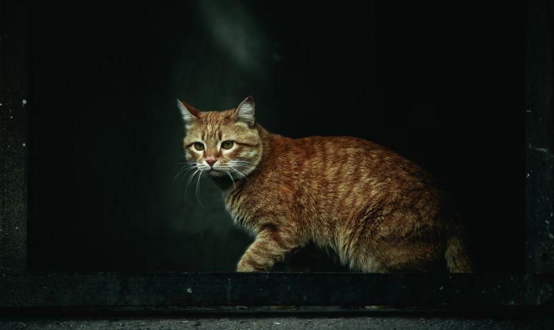 cat, animals Catphoto preview