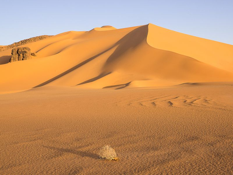 алжир, пустыня, сахара, тадрарт, песок, дюны, утро Раннее утроphoto preview