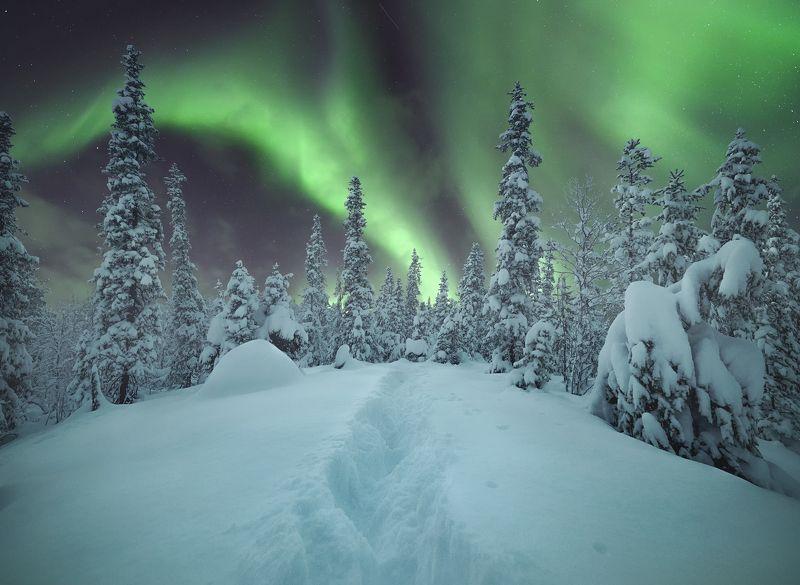 сверное сияние, кольский  полуостров, aurora borealis Зимний лесphoto preview