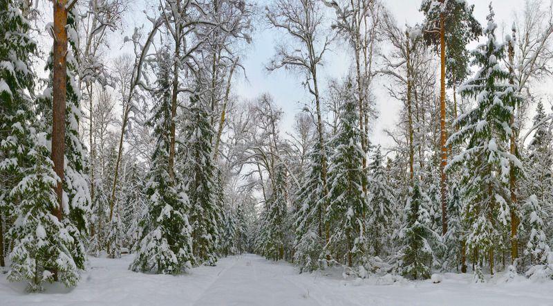 В лесу родились ёлочкиphoto preview