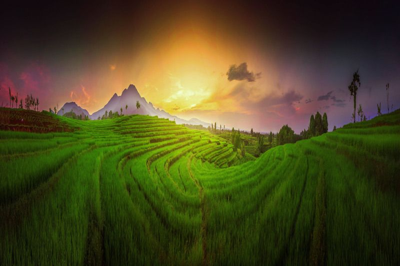 paddy, field, rice, beautiful, background, nature, grass, sky, farm, green, landscape, plant, sunset, fields, summer, outdoor, agriculture, rural, blue, thailand, sunrise, natural, farmland, view, sun, meadow, cloud, plantation, terrace, land, countryside story morning the earthquakephoto preview
