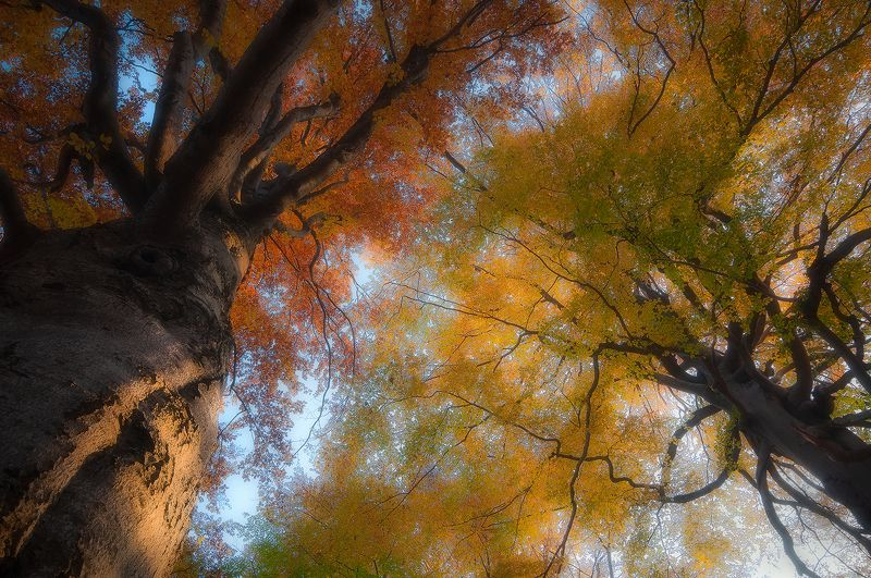 mehedinti, romania, tree, lights, branches Autumn symphonyphoto preview