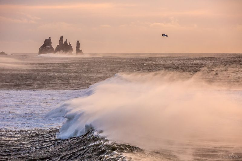 reynisfjara. iceland. Seagull playing with waves. Reynisfjara. Iceland.photo preview
