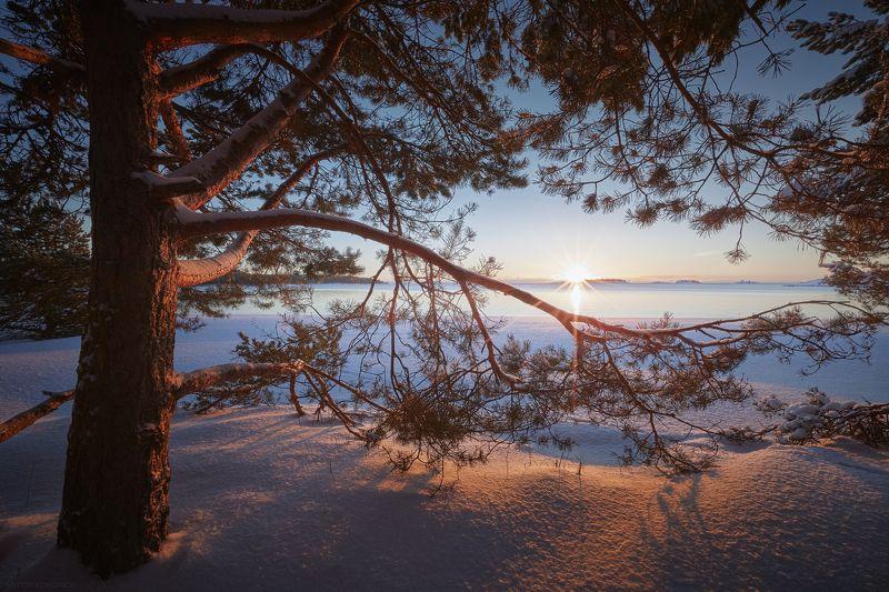 Ладога, рассвет, солнце, сосны Первые лучиphoto preview