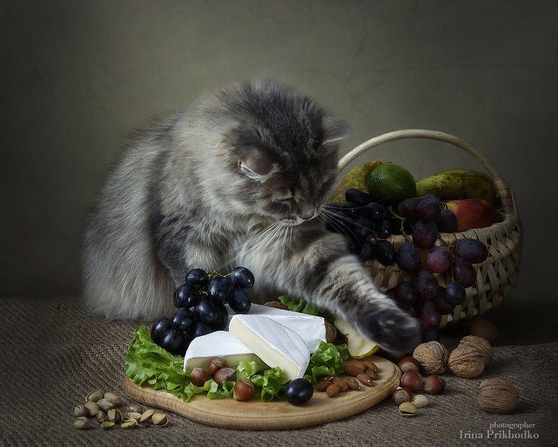 домашние животные, кошка Масяня, натюрморт, художественная фотография, сырная тарелка, фрукты Масяня и сырная тарелкаphoto preview