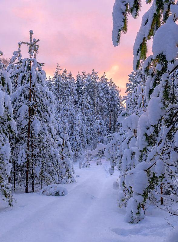 Снежное безмолвиеphoto preview