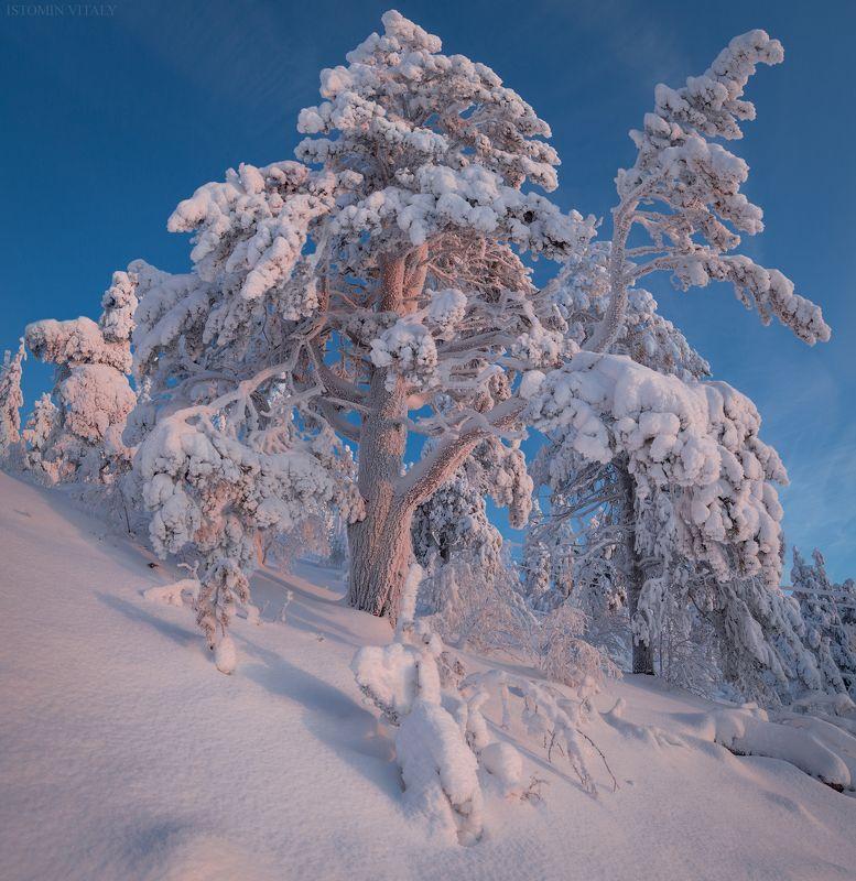 пейзаж,снег,зима,россия,лес,солнечно,кольский photo preview