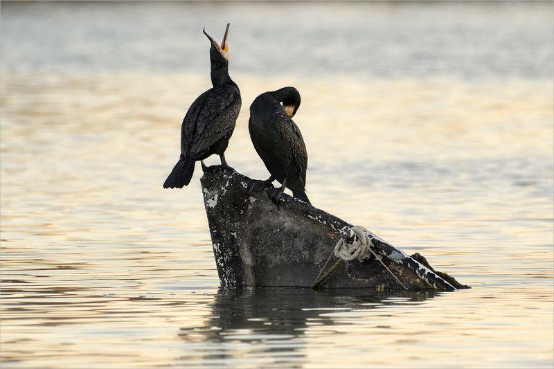 баклан, лодка, вода, закат, фауна Песня о любвиphoto preview