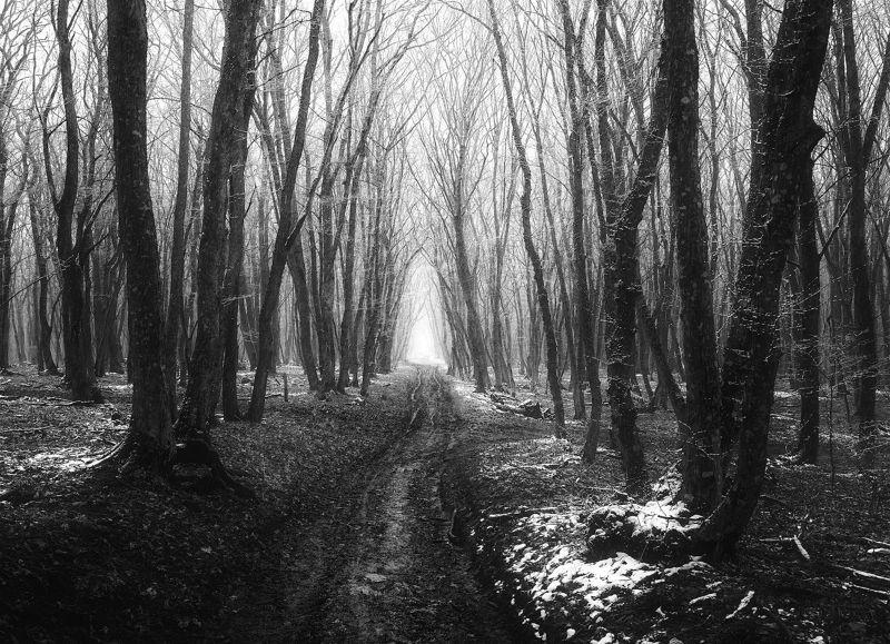 пейзаж,черно-белое Межсезоньеphoto preview