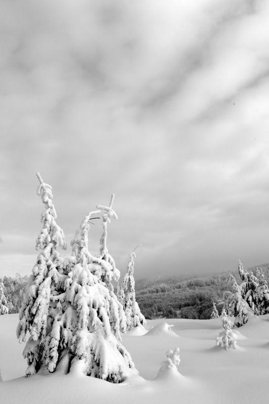 В снежном пленуphoto preview