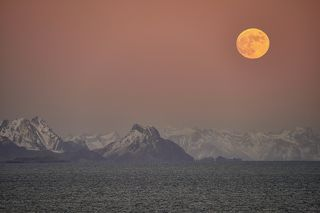 With a view of the Lofoten Islands