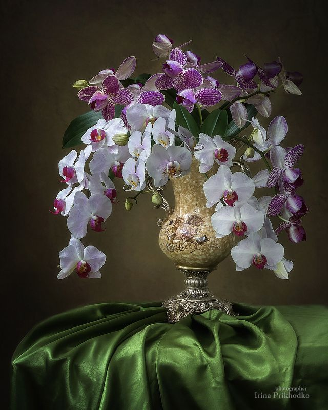 натюрморт, букет, флористика, орхидеи фаленопсис, винтажный цветочный натюрморт, художественная фотография Натюрморт с букетом орхидейphoto preview