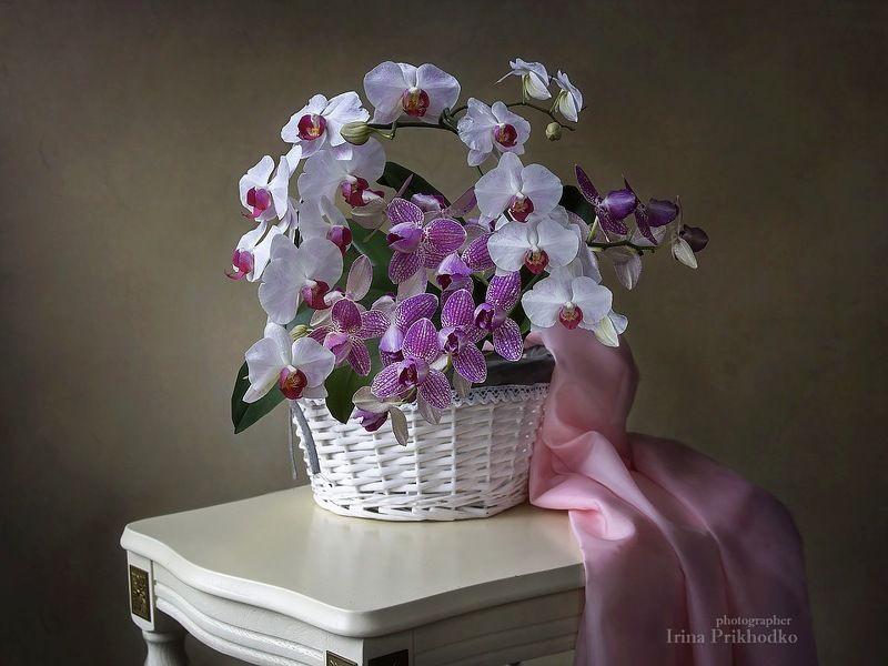 натюрморт, цветочный натюрморт, флористика, корзина цветов, орхидеи фаленопсис Натюрморт с корзиной орхидейphoto preview