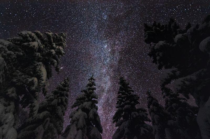 milkyway, landscape, night, sky, tree Night\'s Watchphoto preview
