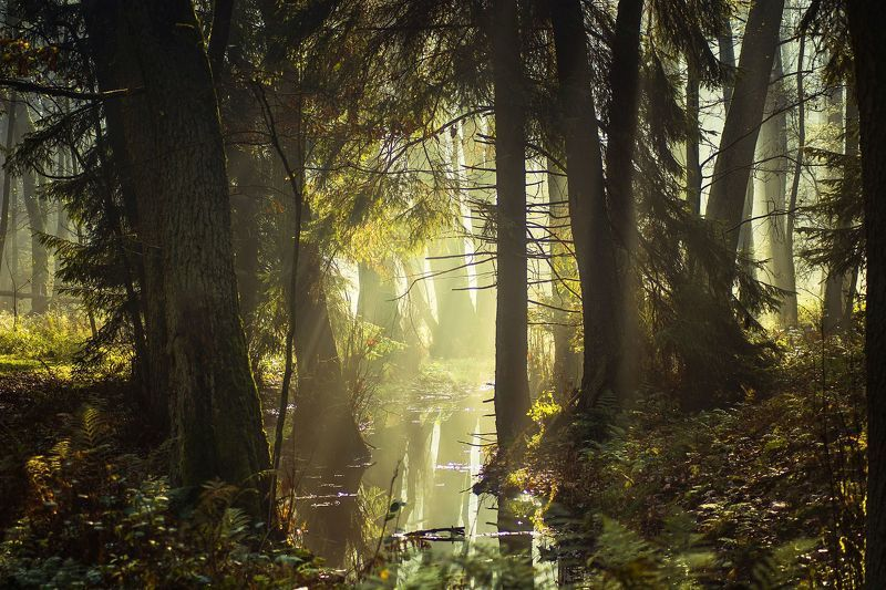 dawn,fog,trees,water,sky,light,landscape,nature,nikon,mist,forest, Touch of lightphoto preview