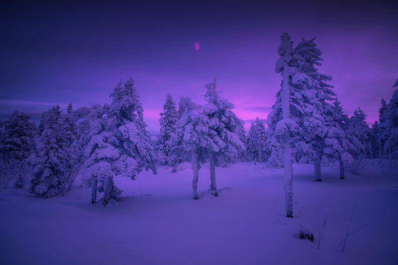 урал, таганай, зима На опушках Таганаяphoto preview
