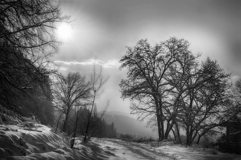 My winter, Black and white, forest, treesзима, лес, деревья My winterphoto preview