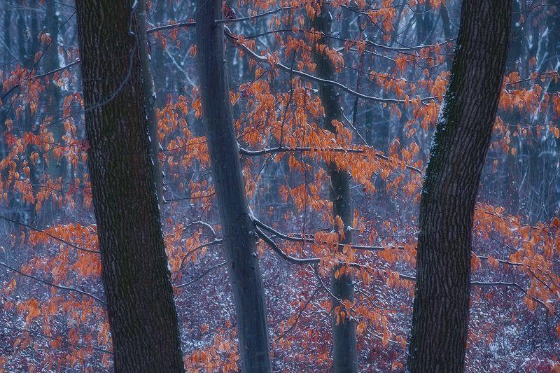 faget, romania, tree, landscape, nature Everlongphoto preview