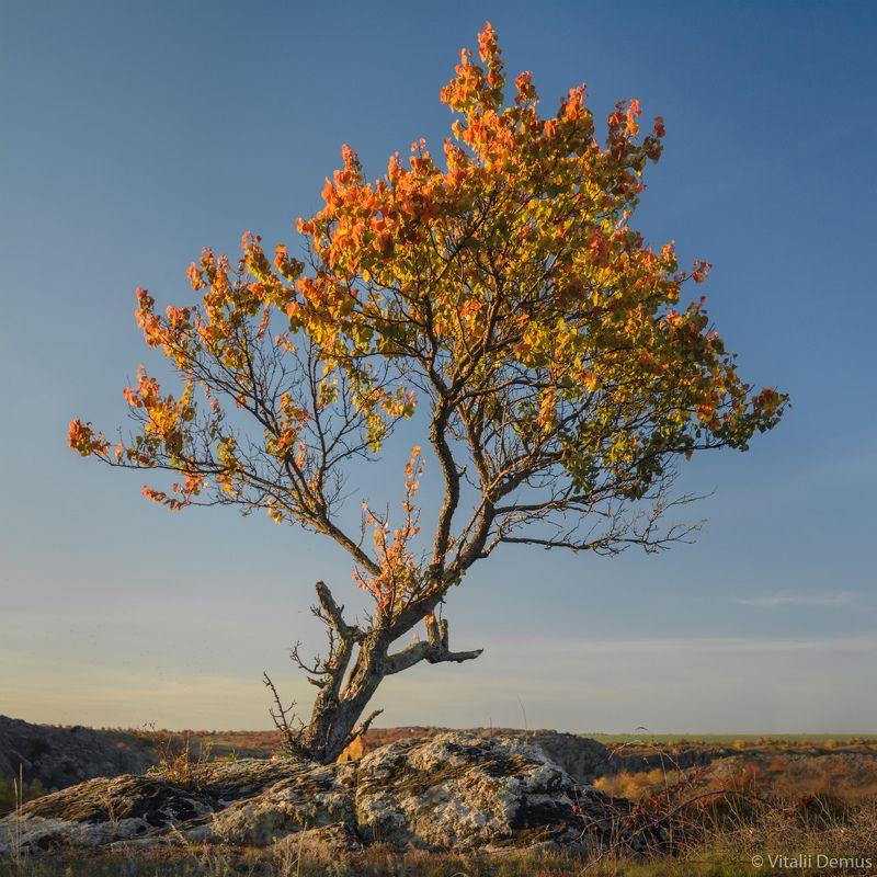 осень, дерево, квадрат, закат, желтый, контраст, яркий, оранжевый, небо Треугольное дерево. Актовский каньонphoto preview