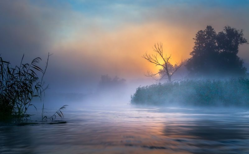 dawn,fog,nature,clouds,sky,water,river,gwda,sun,mist,landscape,summer,tree,light,nikon, Rowing through a misty morning.photo preview