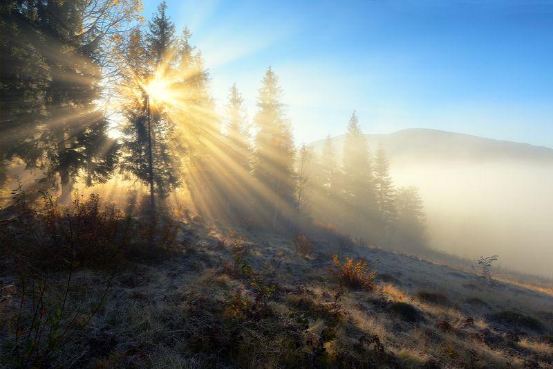 горы, утро, туман, солнце Ясиня.photo preview