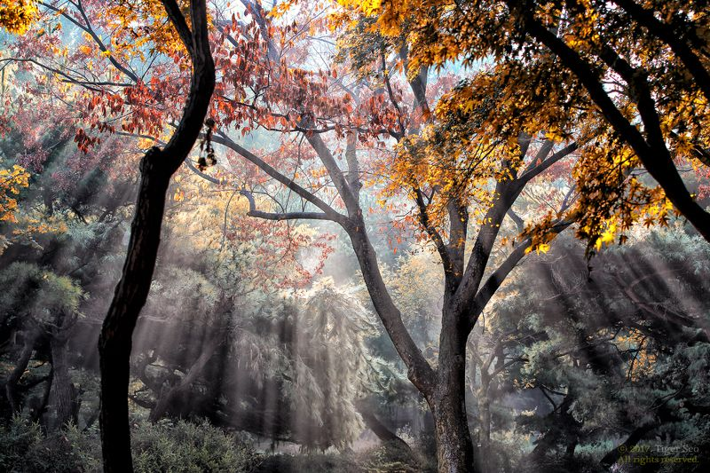 Rays light sunrise trees foliage beam Korea Raysphoto preview