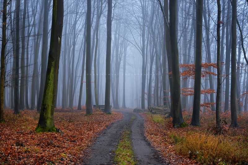 лес las forest mist magic foggy path road dranikowski trees tree autumn fall лесphoto preview