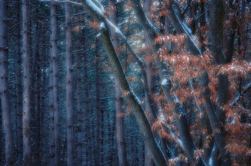 abstract, treescape, nikon Atmospherephoto preview