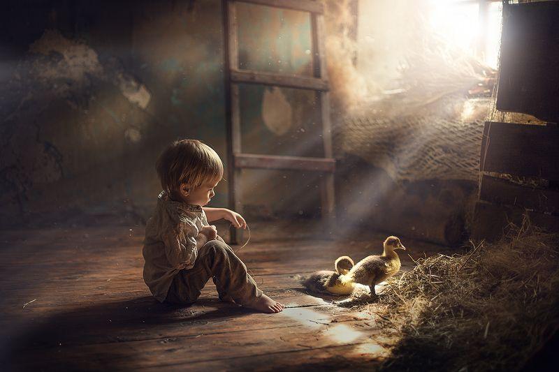 малыш, мальчик, утята, гусята, пасха, деревня А скоро Пасха...photo preview