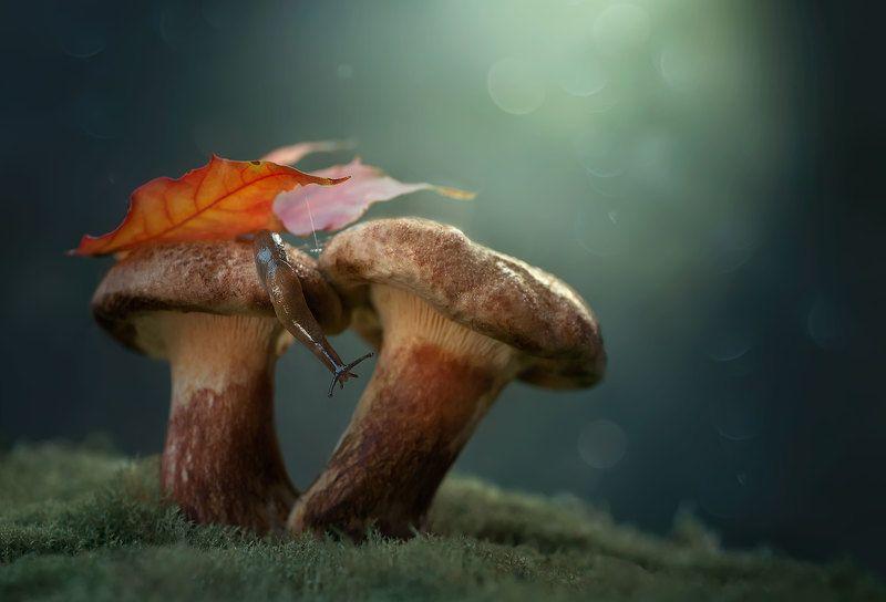 макро, гриб, осенний лист, слизняк, природа photo preview