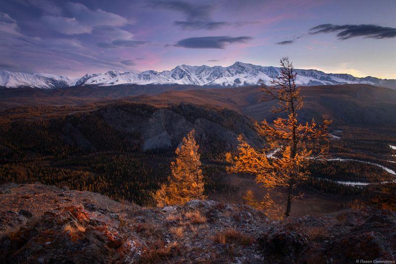 пейзаж, осень, лес, свет, солнце, желтый, алтай, горы, закат Таджилуphoto preview