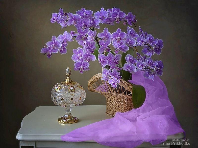 натюрморт, цветочный натюрморт, художественное фото, цветущая орхидея, фаленопсис мини,  Зимняя нежность орхидейphoto preview