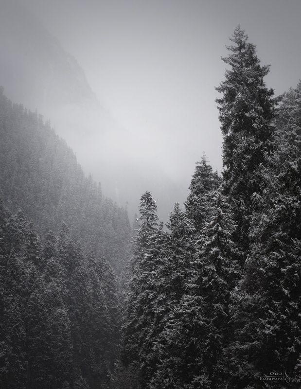 домбай, кчр, карачаево-черкессия, кавказ, снег, снегопад, горы, туман, зима, зимняя сказка, дымка, чб Снегопадphoto preview