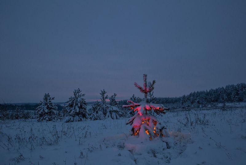 сумерки, лес, пейзаж, зима Предновогодние сумеркиphoto preview