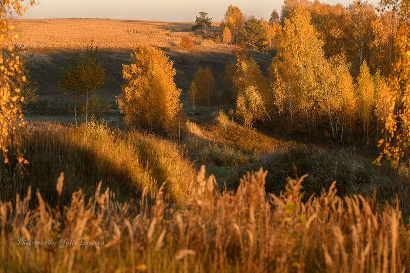 пейзаж,природа,россия,осень,золотая осень,березовая роща \'Русский пейзаж\