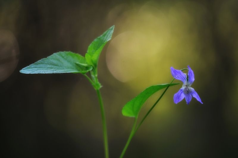 макро,природа,лес,цветы в ожидании весны ))))photo preview
