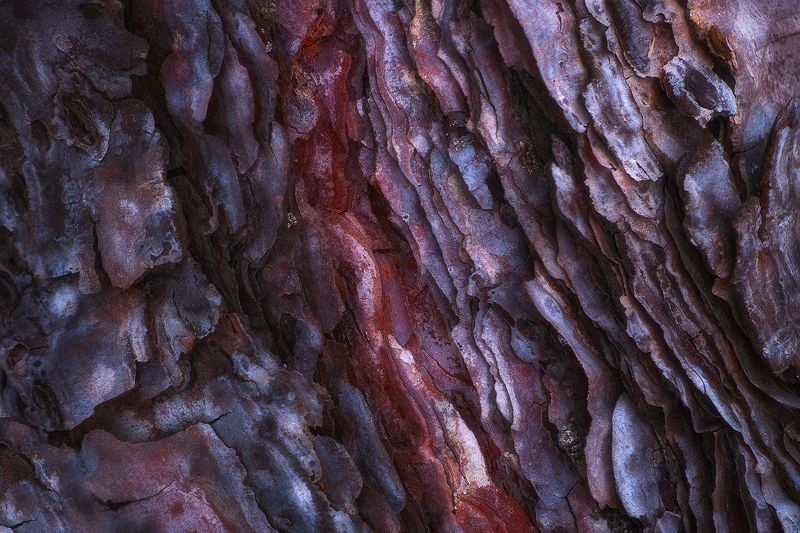 tree, bark, abstract, texture, nikon, nature Blood Barkphoto preview