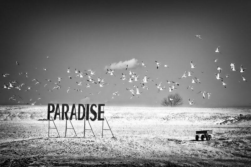 африка, остров, телега, беларусь, берег, чайки Остановка Райphoto preview