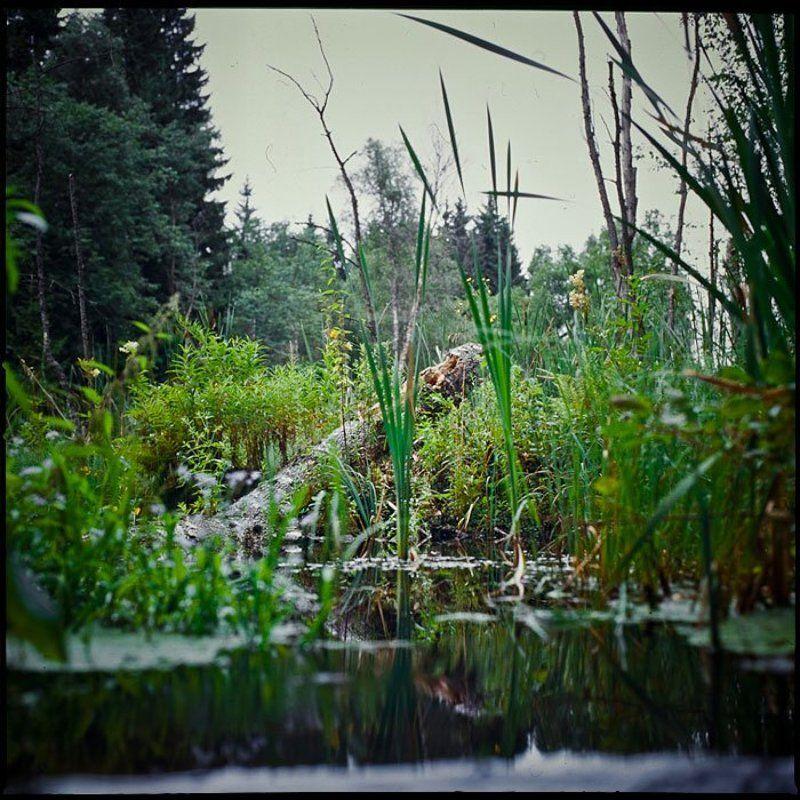болото, природа, вода, лес Под \
