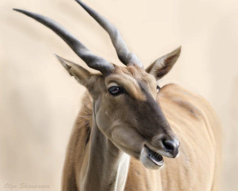 животные, зоопарк, нежность Нежная.photo preview