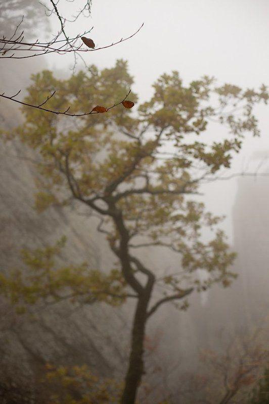 крым, украина, демерджи, туман, дерево, Скрыто в туманеphoto preview