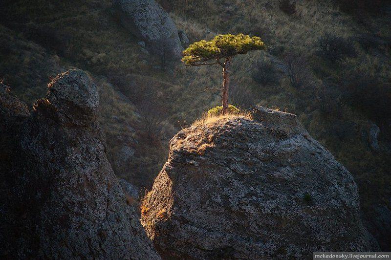 стойкость, дерево, демерджи, крым, украина, туризм Стойкостьphoto preview