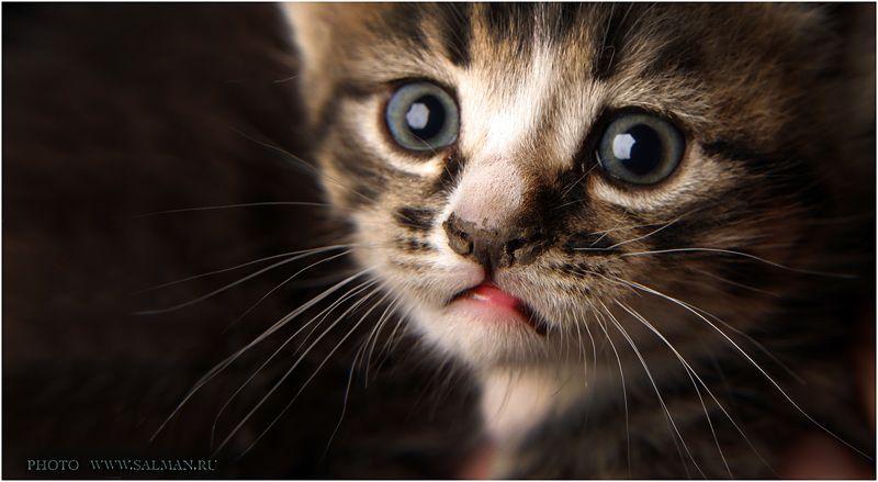 кот,котик, котикphoto preview
