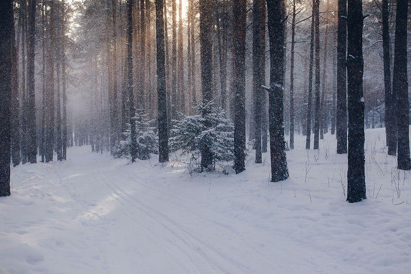 зима, снег, лес, природа, урал, снегопад Снежный лесphoto preview