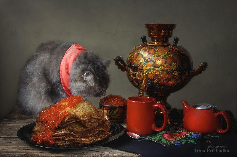 домашние животные, кошка Масяня, фотография еды, блины, красная икра, самовар, Масленица Репетируем Масленицуphoto preview