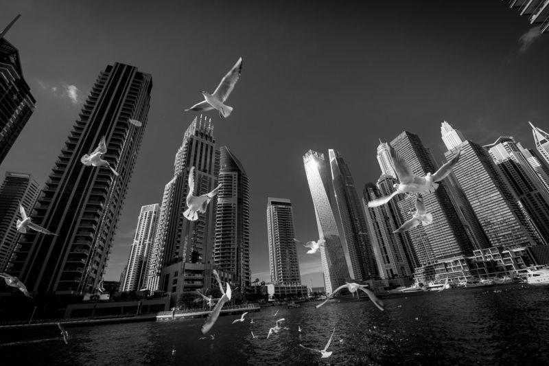 дубай, оаэ, объединенные арабские эмираты, Дубайphoto preview