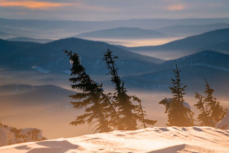 дали, хребты, долины, дымка, контровый свет, пихты, гора, зелёная, курган, шерегеш, горная шория, сибирь, зима Про Сибирский биколорphoto preview